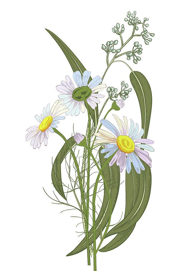Set Of Chamomile Daisy Bouquets White Digital Art by Olga Ivanova