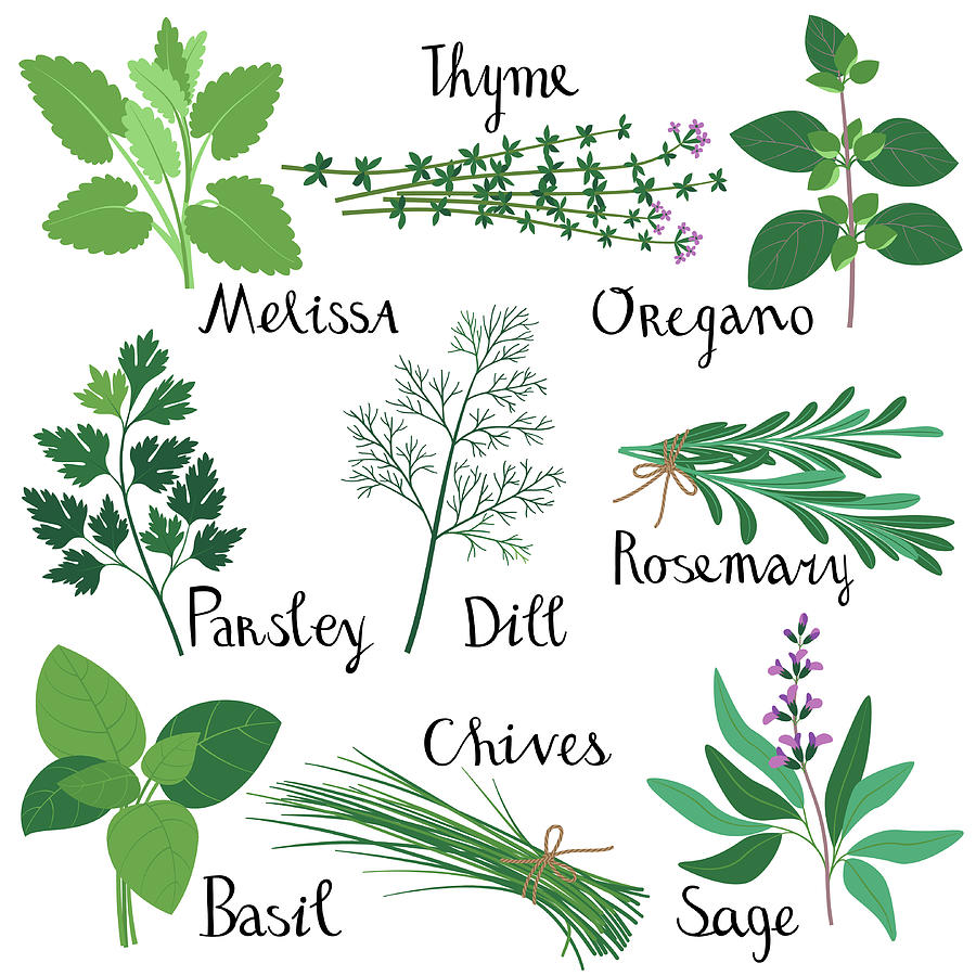 Set Of Fresh Herbs Digital Art by Innabodrova