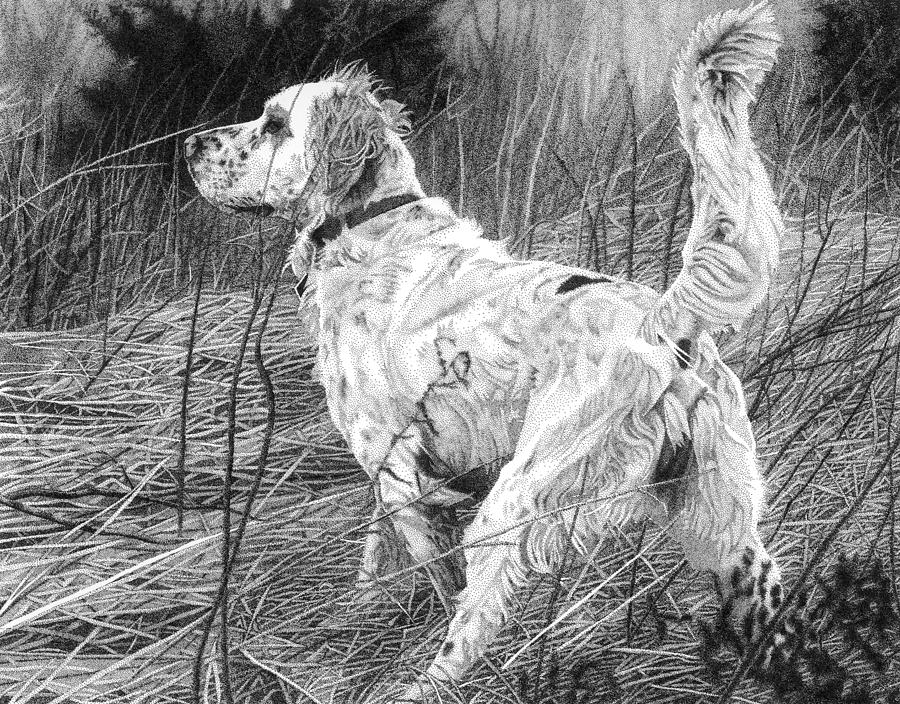 English Setter Drawing - Setter In The Field by Rob Christensen