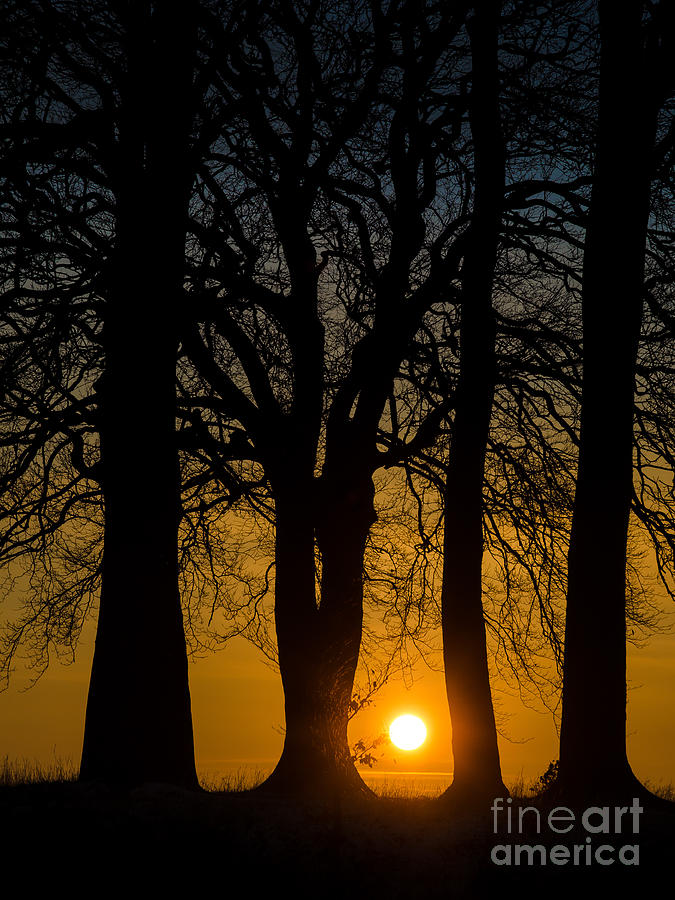 England Photograph - Setting between the trees - Wittenham Clumps by OUAP Photography