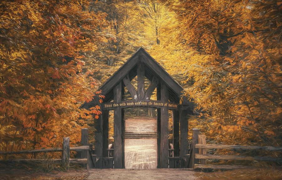 Forest Photograph - Seven Bridges Trail Head by Scott Norris