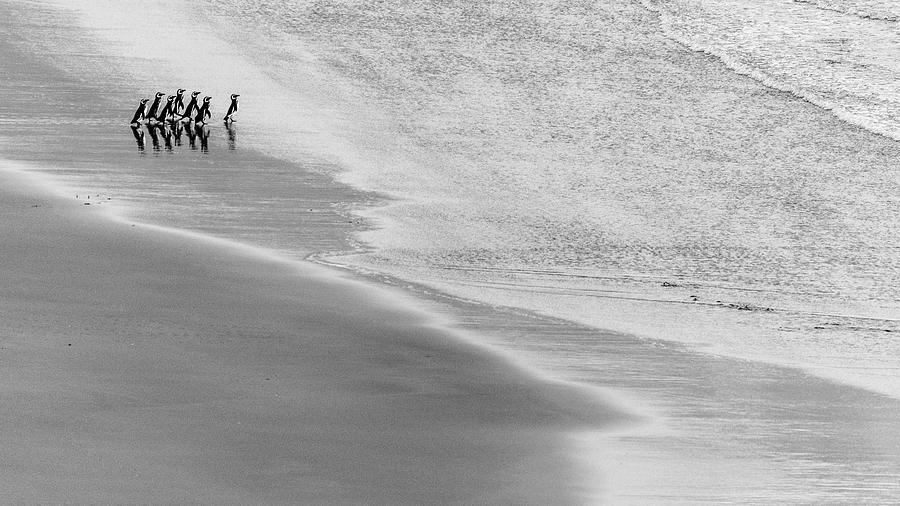 Penguin Photograph - Seven by Miquel Angel Art?s