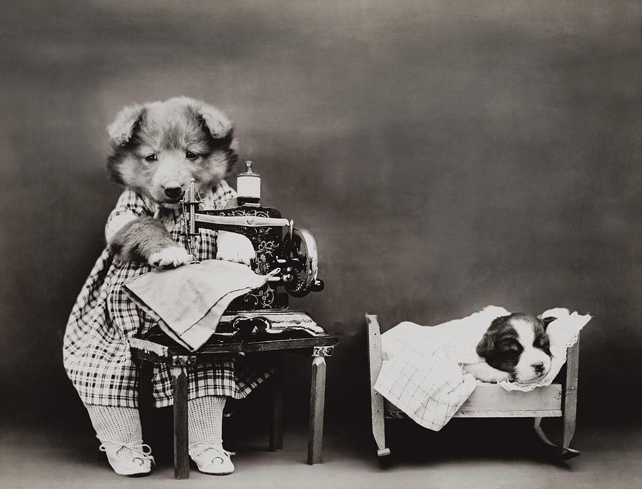 Швейная машинка смешная картинка