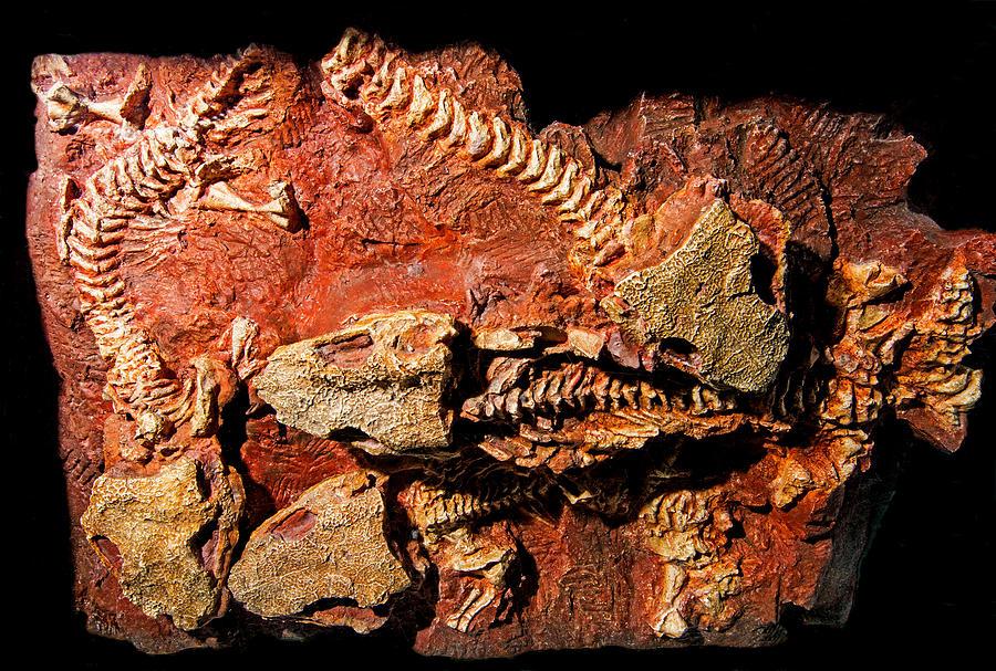 Art print POSTER CANVAS Permian Amphibian Fossil