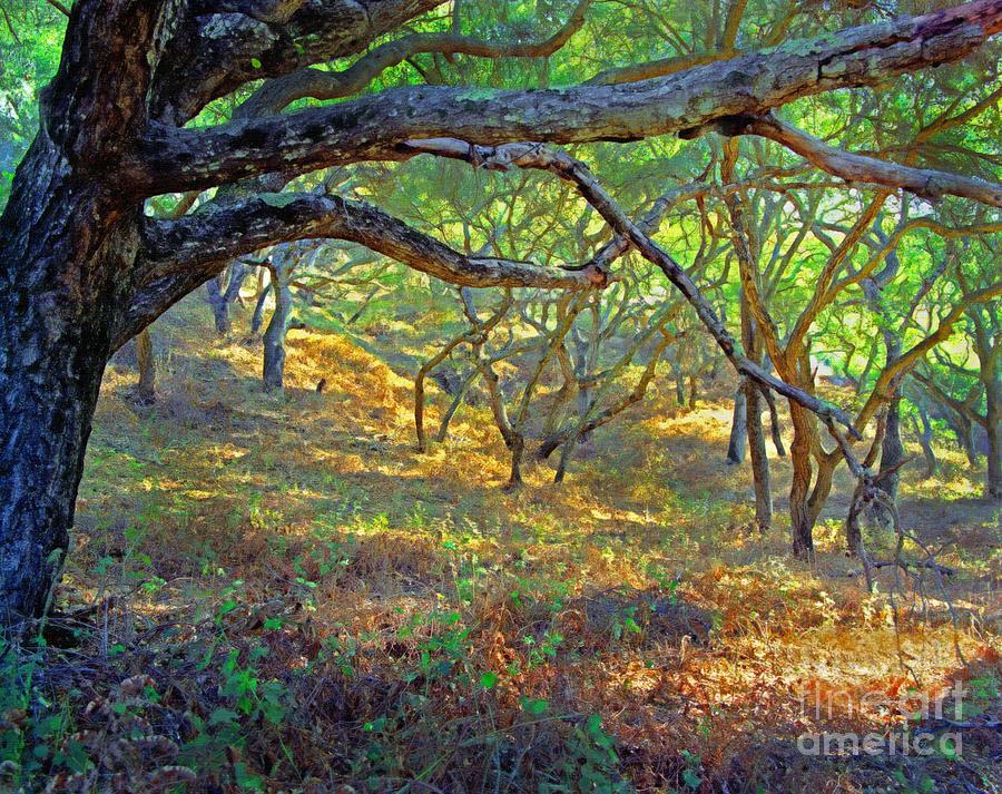 Oak Forest Photograph - Shaded Oaks by Frank Bez