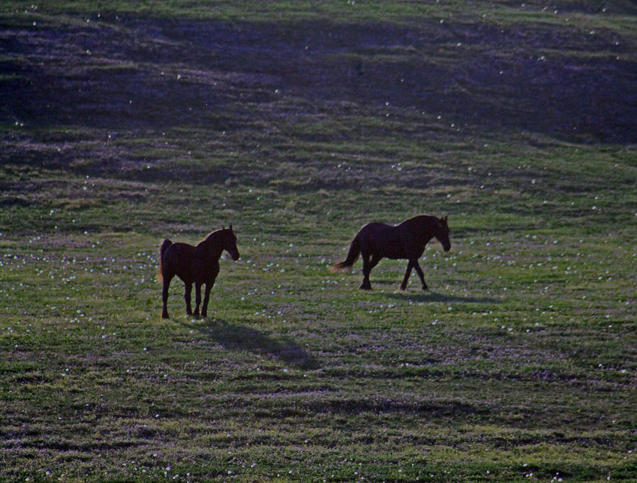 Horses Photograph - Shades by Lily K