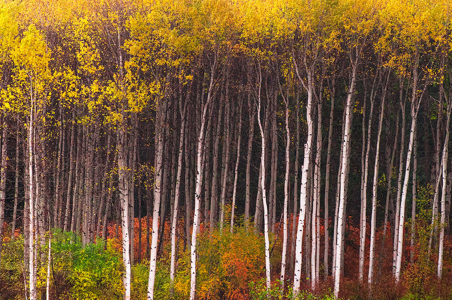 Shades of Autumn by Crystal Hoeveler