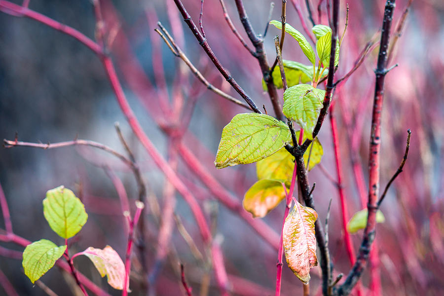 Abstract Photograph - Shades Of Autumn - Reds And Greens by Alexander Senin