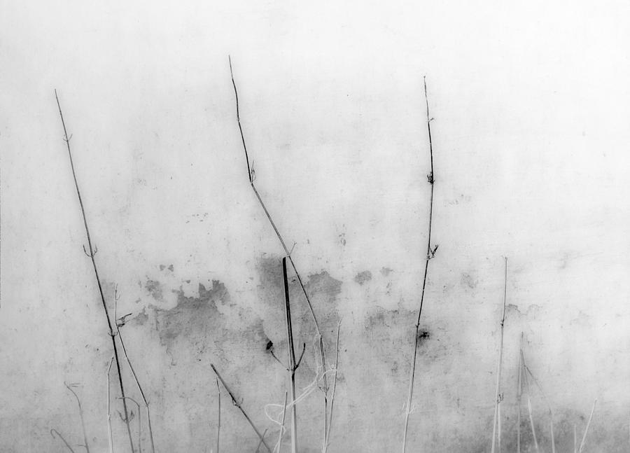 Gray Photograph - Shades Of Grey by Prakash Ghai