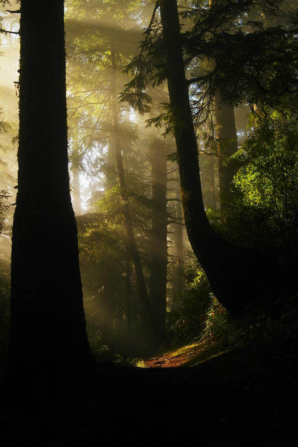 Trees Photograph - Shadow Dreams by Jeff Swan