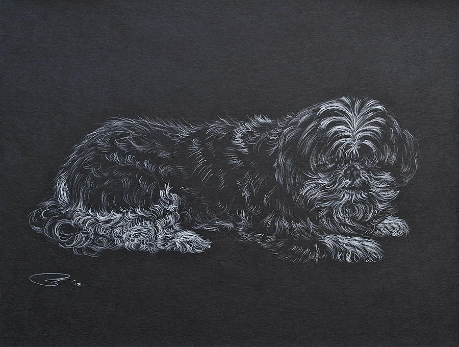 Dog Drawing Drawing - Shadow by Michele Myers