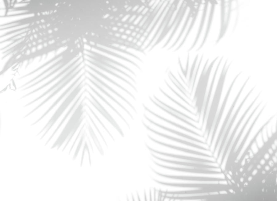 Shadow Palm Leaves Photograph by Lamyai