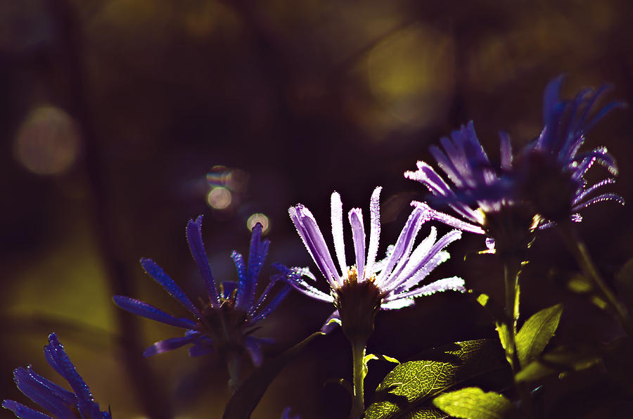 Flowers Photograph - Shadow Treasures by Melissa Petrey