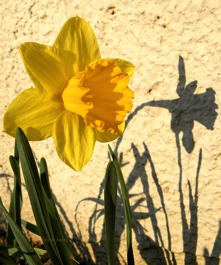 Narcissus Photograph - Shadowing Me by Chris Berry