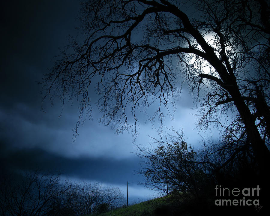Nature Photograph - Shadowlands 3 by Peter Awax