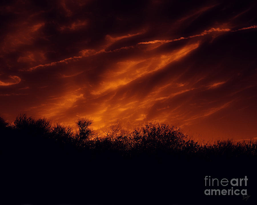 Nature Photograph - Shadowlands 7 by Peter Awax