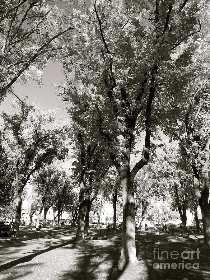 B&w Photograph - Shadows Of Fall by Monico Art
