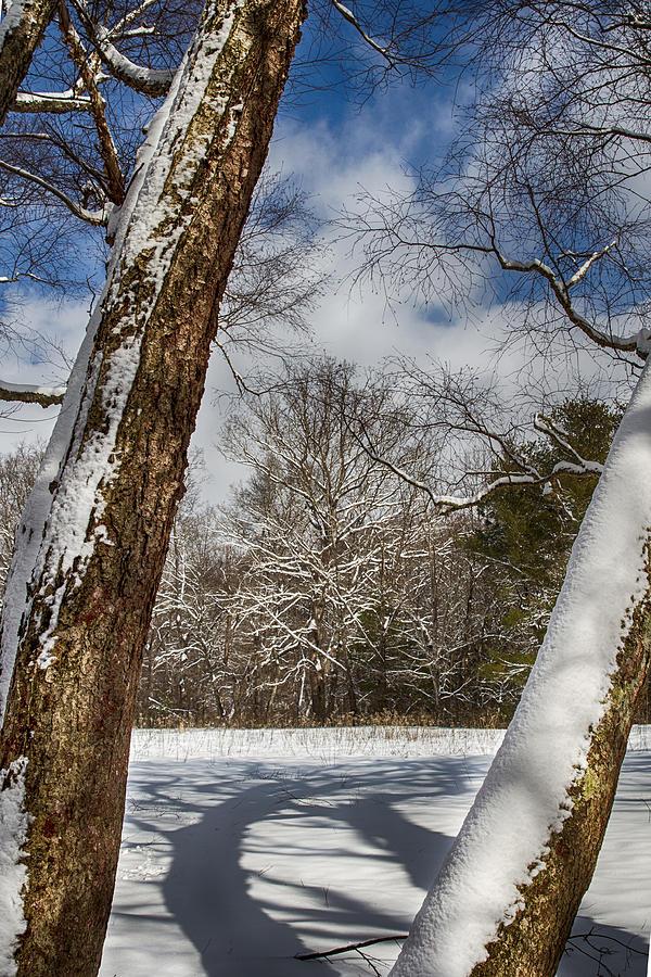 Photo Photograph - Shadows On The Snow by John Haldane