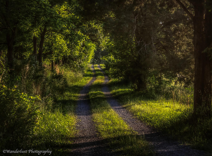 Lane Photograph - Shady Country Lane by Paul Herrmann
