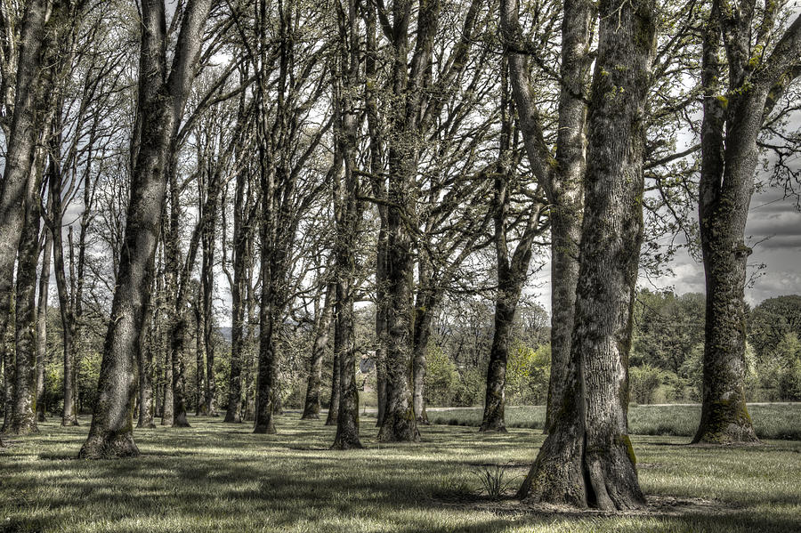Tree Photograph - Shady Grove by Jean Noren