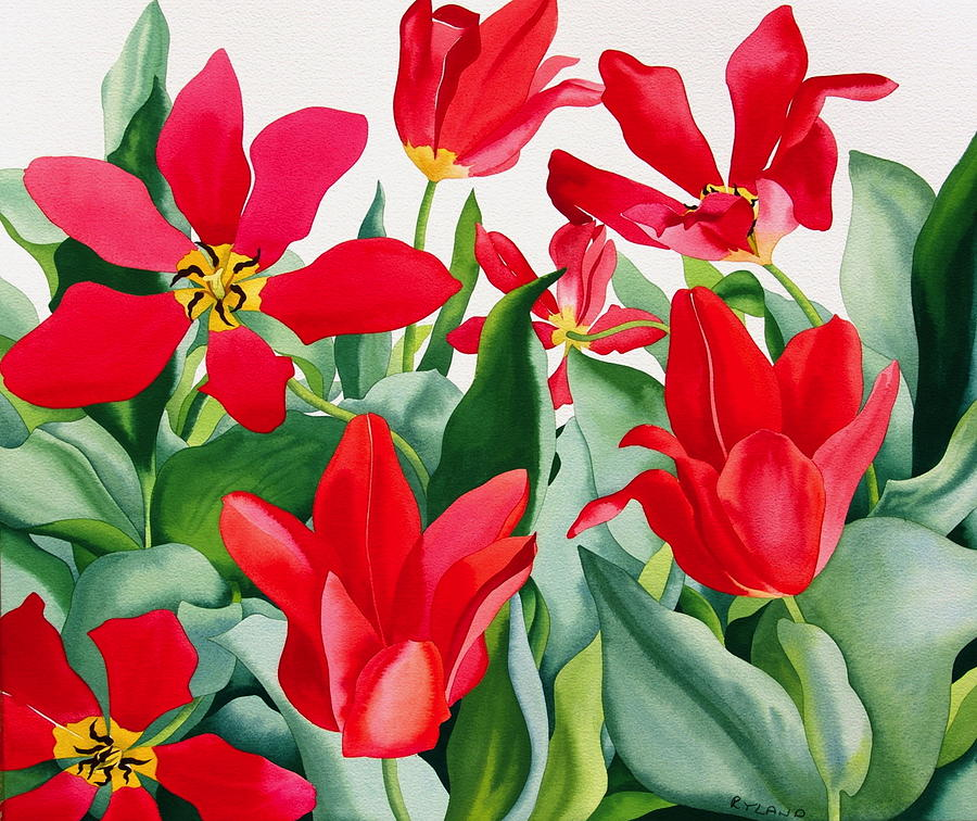 Tulip Painting - Shakespeare Tulips by Christopher Ryland