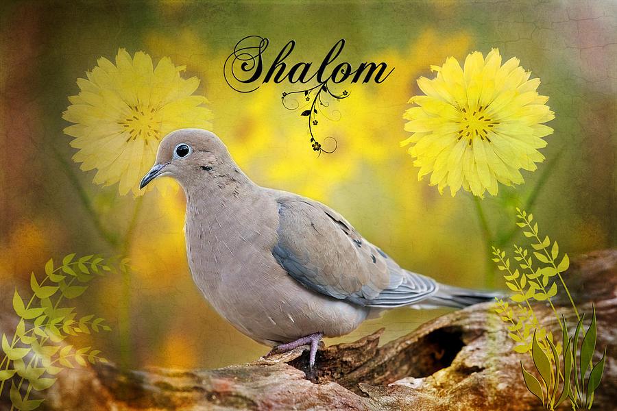 Shalom Photograph - Shalom by Bonnie Barry