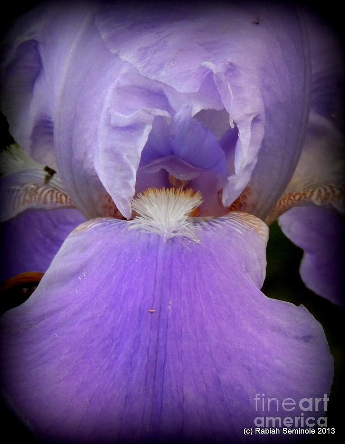 Flowers Photograph - Sharing My Iris by Rabiah Seminole