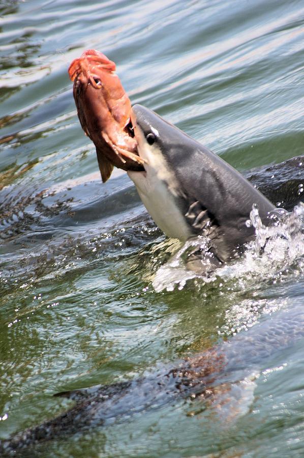 Shark Attack by David Rich