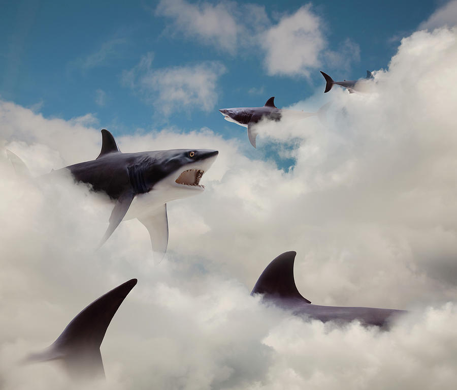 Sharks Floating In Clouds Photograph by John M Lund Photography Inc