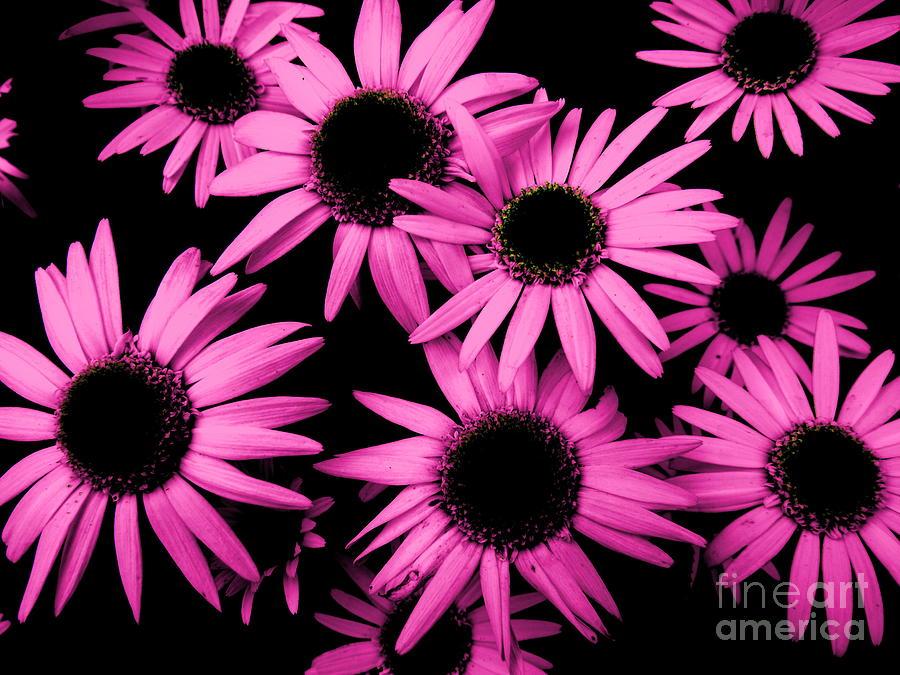 Daisy Photograph - Shasta Daisy by Melissa McDole