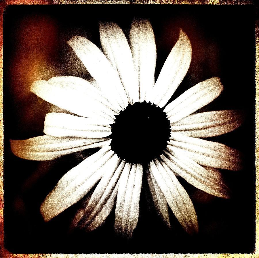 Shasta Daisy Photograph - Shasta Daisy - Sepia Tones Photograph by Laura Carter