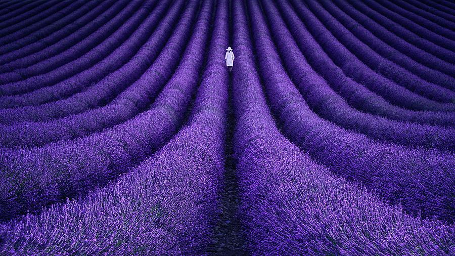 Purple Photograph - She by Lluis De Haro