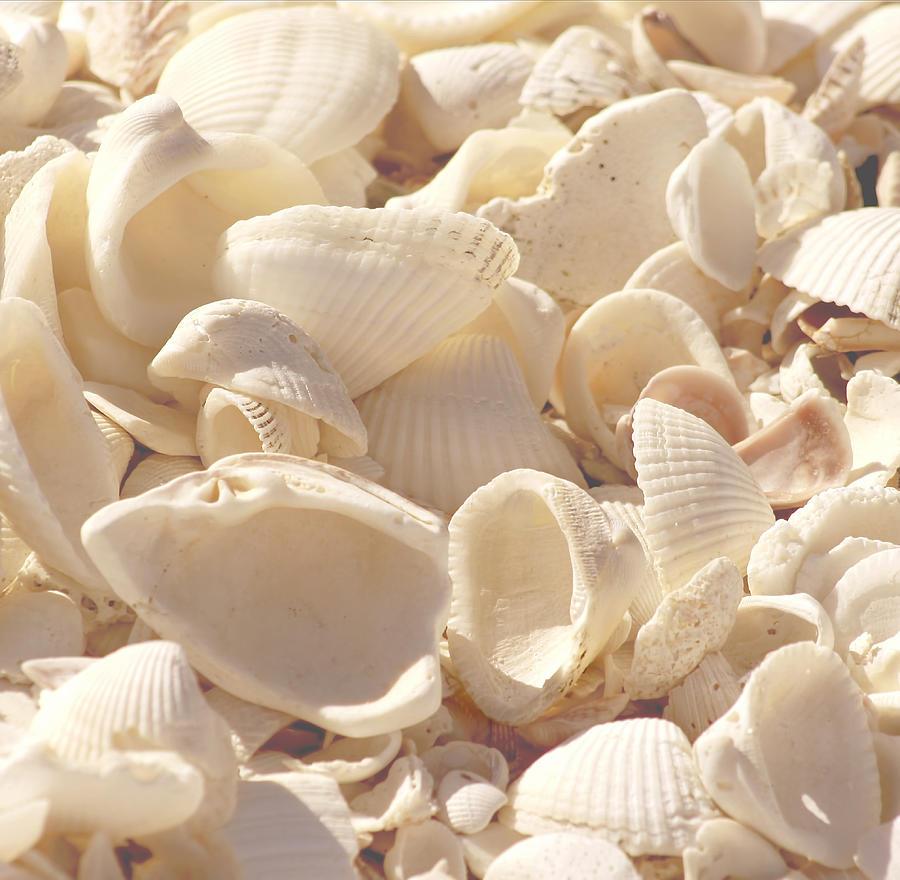 Seashells Photograph - She Sells Seashells by Kim Hojnacki