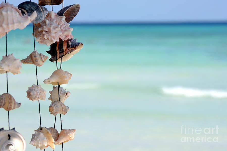 Seashells Photograph - She Sells Seashells by Sophie Vigneault