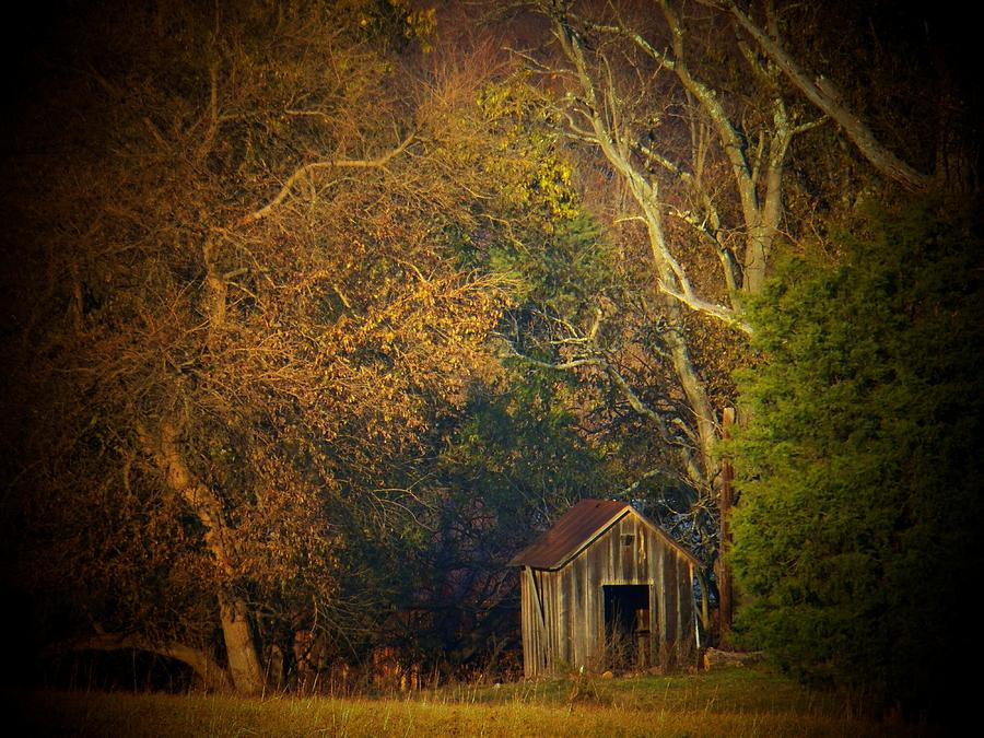 Old Barns Photograph - Shed And Trees by Joyce Kimble Smith