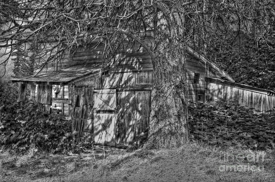 B&w Photograph - Shed Bw by Timothy Hacker
