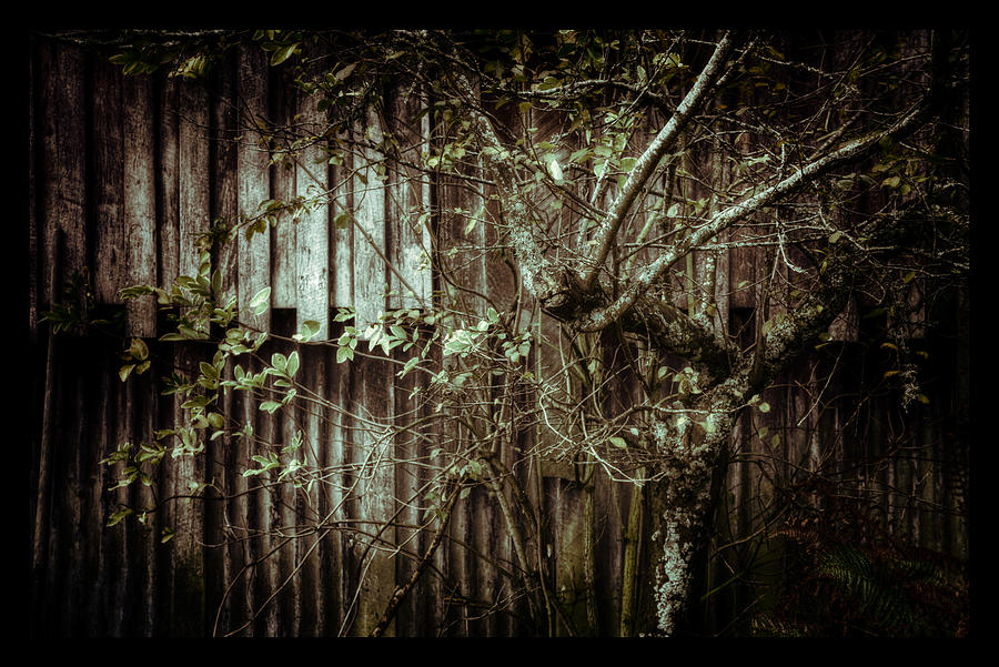 Vintage Photograph - Shed Of Memories by Darryl Gibbs