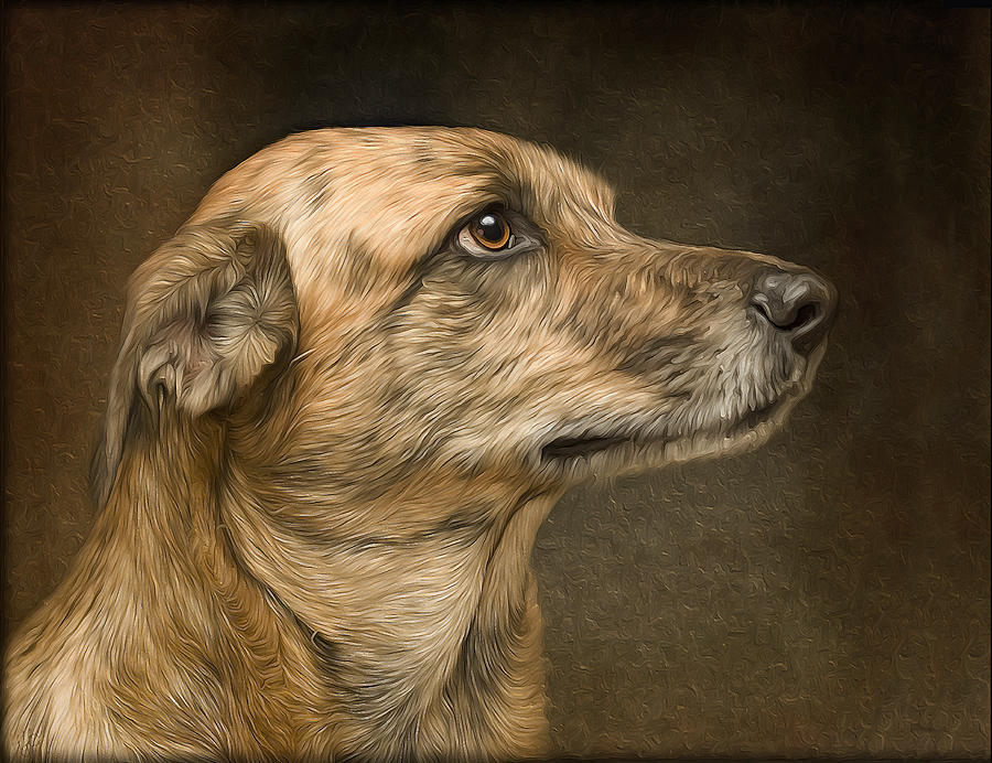 Dog Painting - Sheeba by Hazel Billingsley
