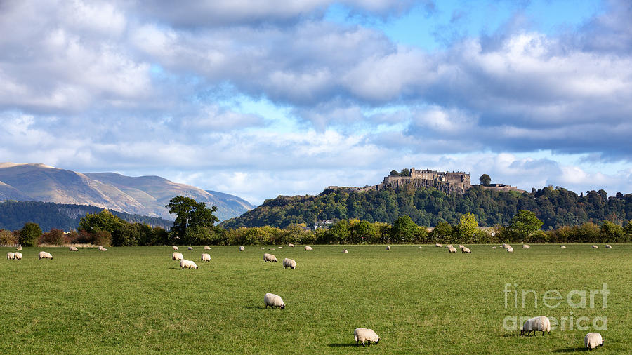 Sheep Photograph - Sheep And Stirling Castle by Jane Rix