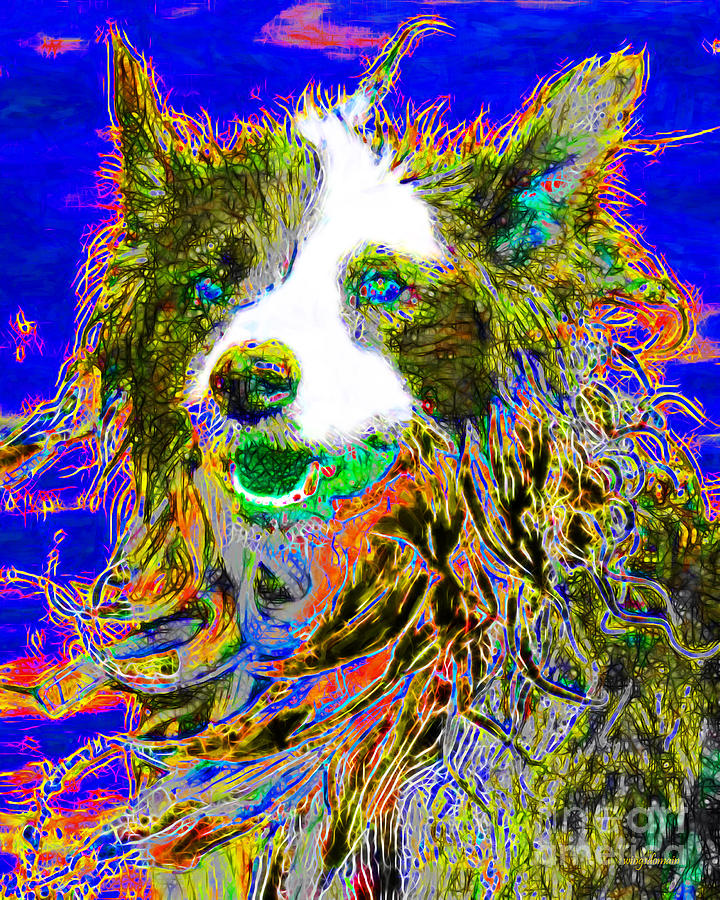 Animal Photograph - Sheep Dog 20130125v3 by Wingsdomain Art and Photography