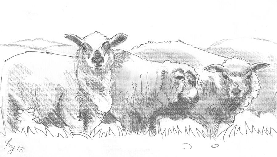 sheep drawing sheep drawing by mike jory