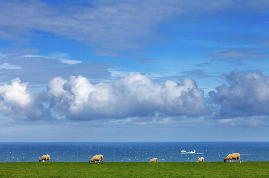 Horizontal Photograph - Sheep Grazing On The North Yorkshire by Panoramic Images