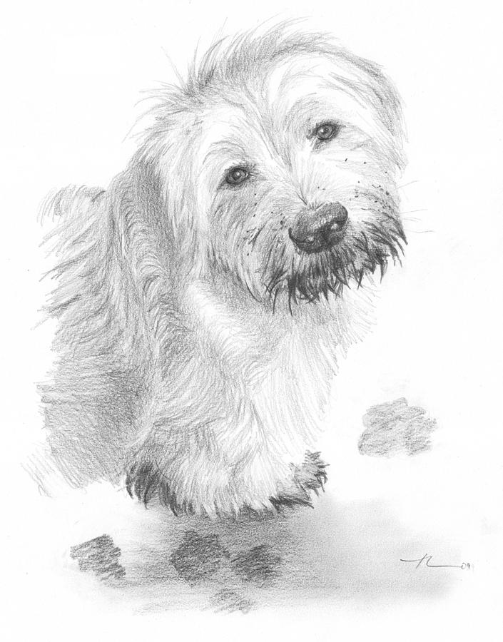 Sheepdog Muddy Pencil Portrait Drawing by Mike Theuer