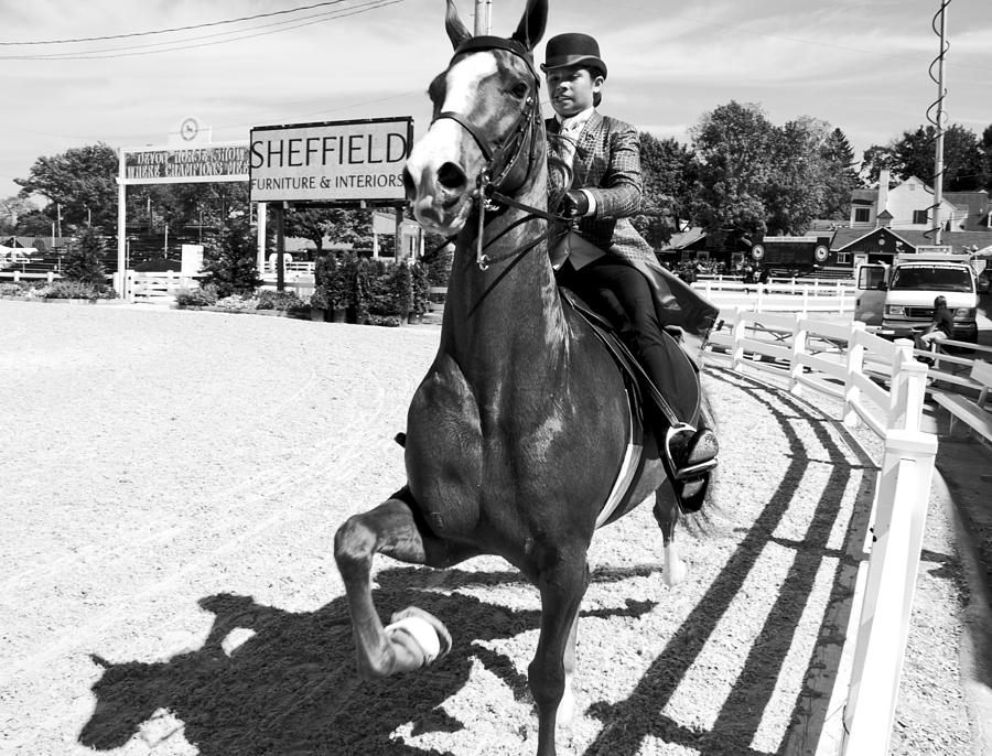 Horse Photograph - Sheffield by Alice Gipson