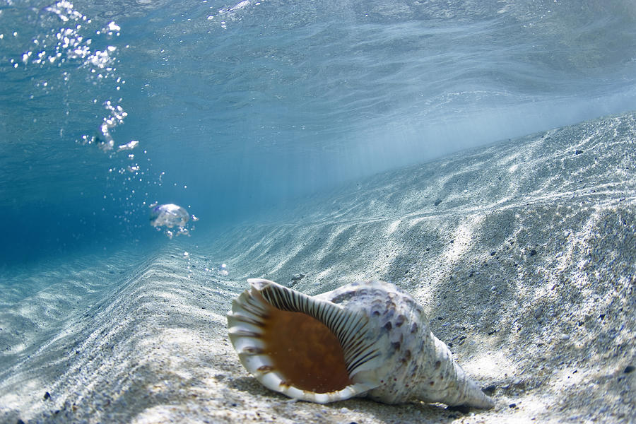 Ocean Photograph - Shell Burp by Sean Davey