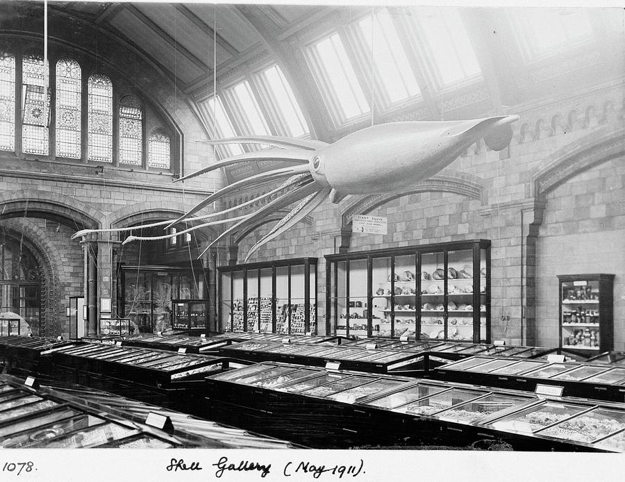 Model Photograph - Shell Gallery by Natural History Museum, London/science Photo Library