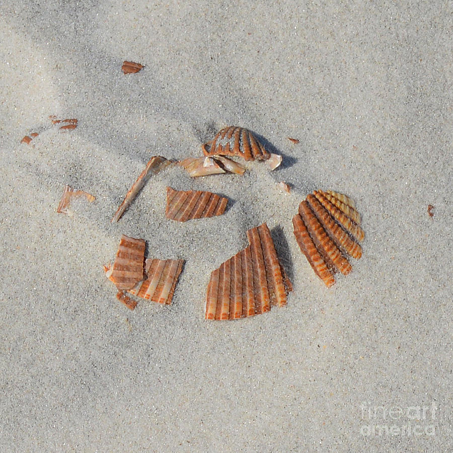 Shell Photograph - Shell Jigsaw by Meandering Photography