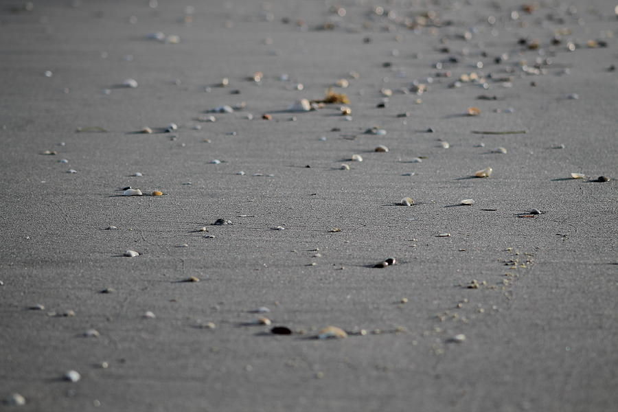 Beach Photograph - Shell Line by Catie Canetti