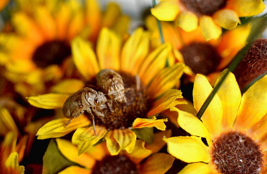 Dry Fly Pyrography - Shell Of A Bug On Flower by Jeffrey Platt