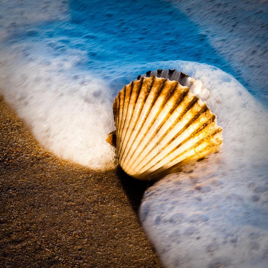 Sea Photograph - Shell Series No. 2 by John Pagliuca